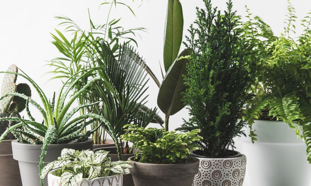 App per riconoscere le piante: le 4 migliori