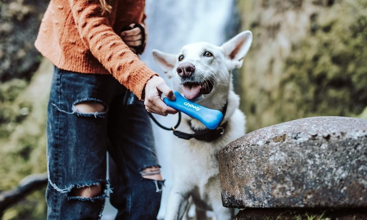 I migliori e-commerce di prodotti per animali
